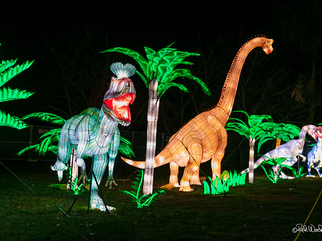 Dinosaur Light Festival Display