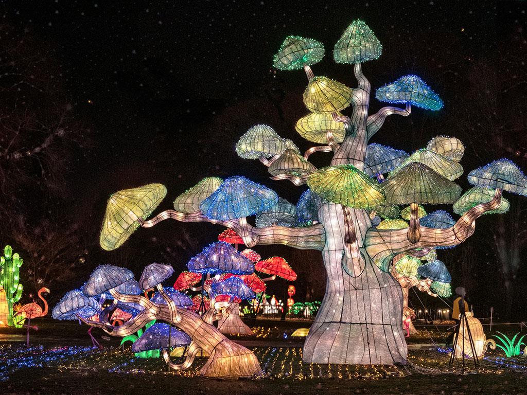 Rainforest LED Lights at Niagara Falls Seasky International Light Show