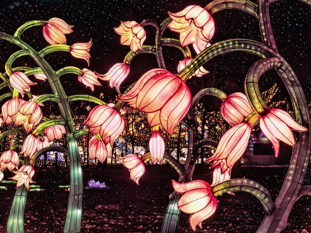 Beautiful Illuminated FLowers